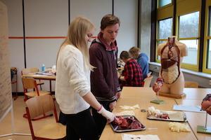 Schüler untersuchen Gewebeproben